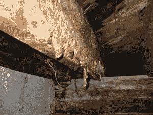 termites-img3