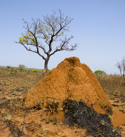 Subterranean Termite Hill in Central Madagascar
